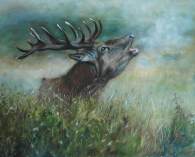 Oil painting of Scottish stag early in the morning