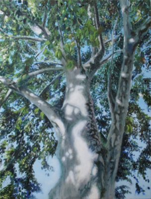 "Treedom ~ 18 x 24"" ~ Oil on wood panel ~$432"