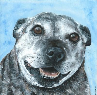 Dougie ~ Pet Portrait Commission ~ Acrylic on canvas
