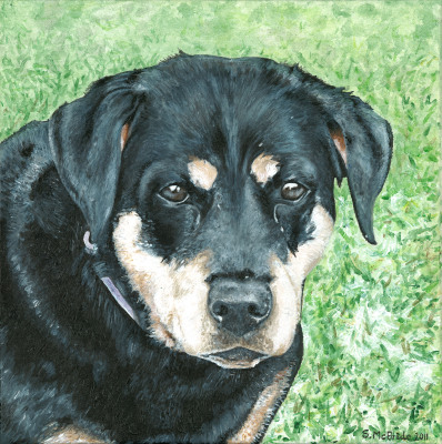 Chance ~ Pet Portrait Commission ~ Acrylic on canvas