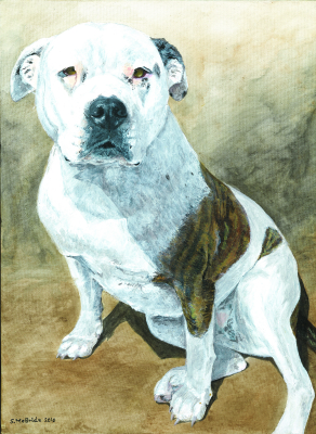 Xena ~ Pet Portrait Commission ~ Acrylic on canvas