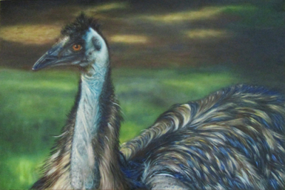 "Emu ~ 24 x 36"" ~ Oil on canvas ~ $580"