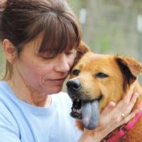 A Message From the CEO of Dogs Deserve Better, Denise Cohn