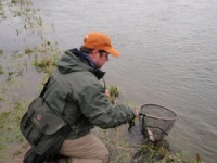 A client lands a rainbow trout from a Gloucestershire trout fishery