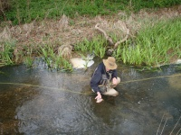 A fisherman catches and releases a brown trout from the river Coln