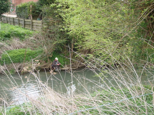 Trout on the River Stour