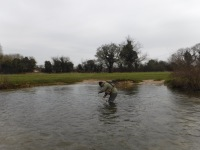 Grayling fishing on the River Coln