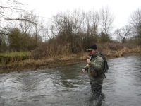 Catching a grayling from the Coln