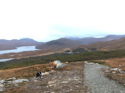 Dog walking at Aline