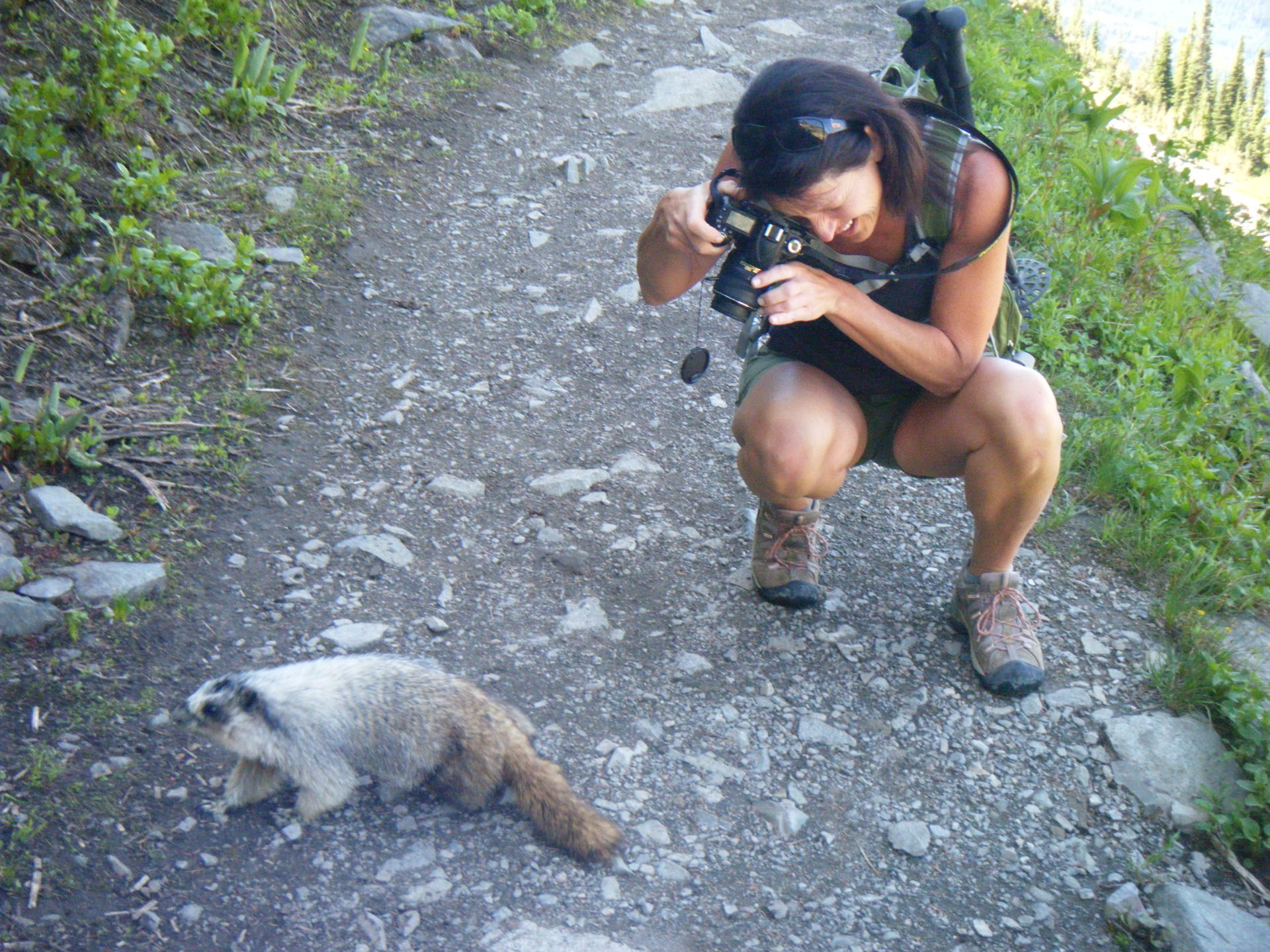 Marmot out for a stroll