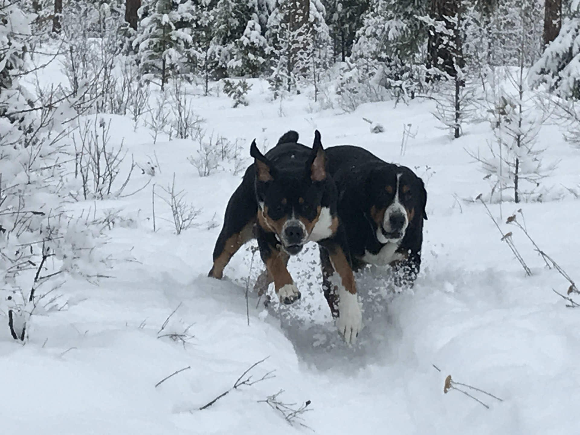 Happy Tails and Happy Trails