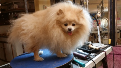 Rant:  The Trouble With Bringing In Someone Else's Dog To Groom