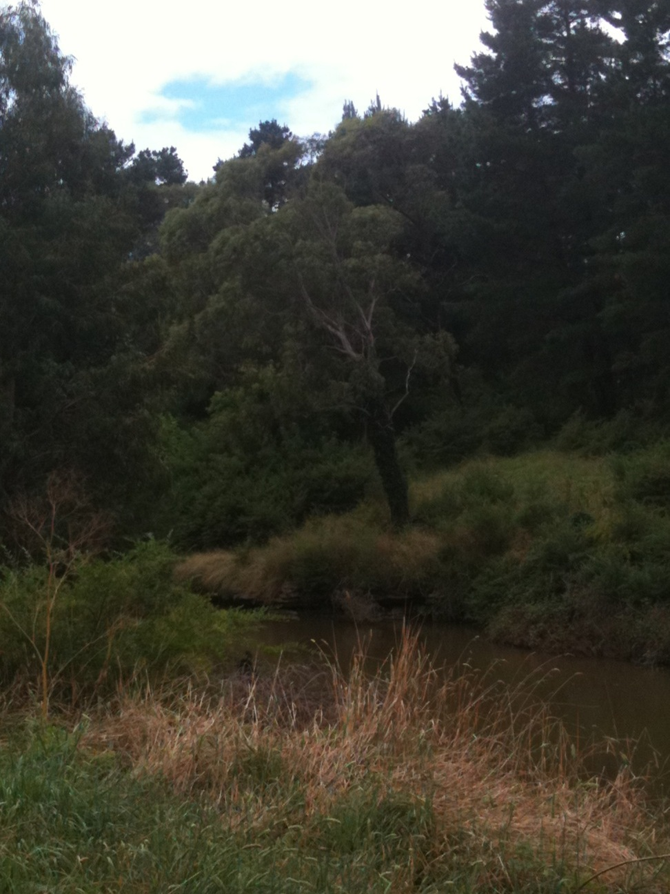 At the Wingecarribee River