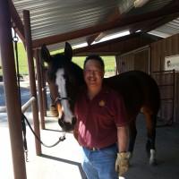 Equine horse animal chiropractic