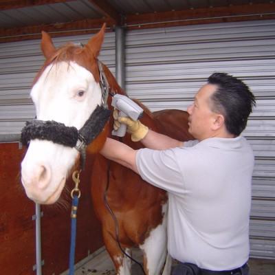 Horse Equine Chiropractic adjustment