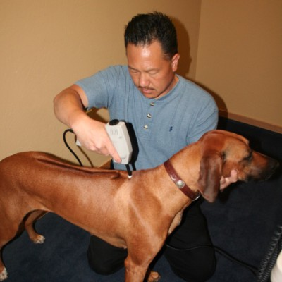 Dog Canine Chiropractic adjustment