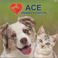 ACE Animal Hospital, Animal Chiropractic, Veterinary adjustment