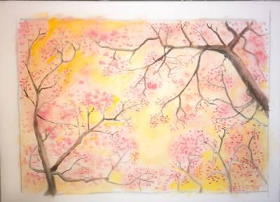 Sakura -- sold
