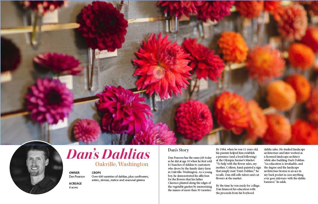 Dan's Dahlias (2/2)
