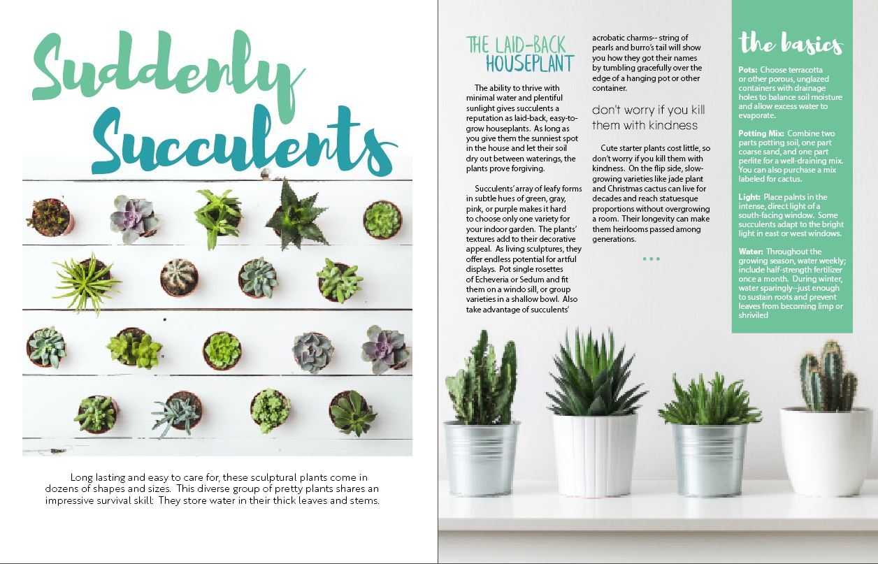 Suddenly Succulents 1/2 (T1)