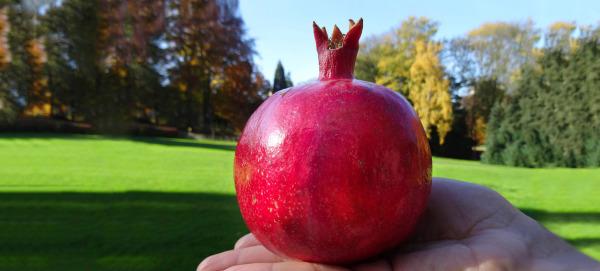 jus grenade belgique granartum jus de fruit bio