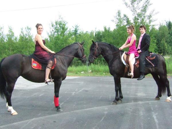Le Cheval Canadien - Notre Passion Notre Fierté