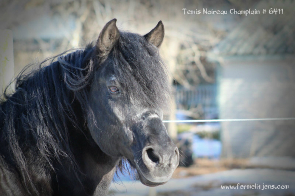 Temis Noireau Champlain # 6411