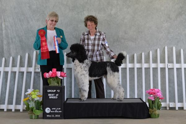 UKC Best of Breed Group 2 Win