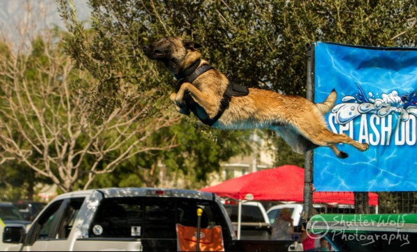 K9 Bronn flies through the air in a K9 Storm ID Harness