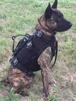 Dog with body armor and camera