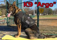 dog wearing a k9 bullet proof vest