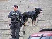 black police dog wearing a k9 bullet proof vest