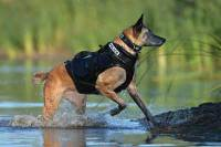 Dog standing on the shore wearing a K9 life jacket