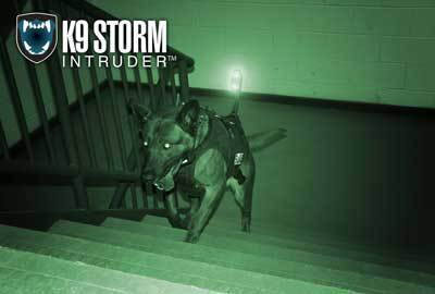 Dog running up stairs with a K9 camera system using night vision.
