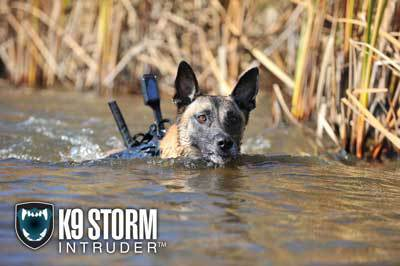 Dog swimming with a K9 camera system