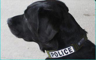 Dog collar for Identification