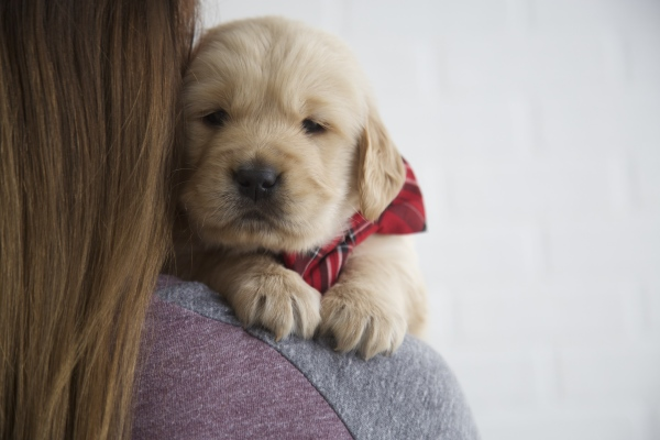 How to Stay Updated & Watch Your Puppy Grow