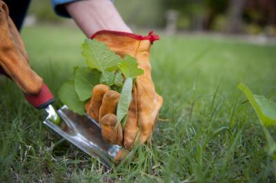 8 mars : Aucunes mauvaises herbes, aucun désherbage, oui c'est possible! - Serge Fortier