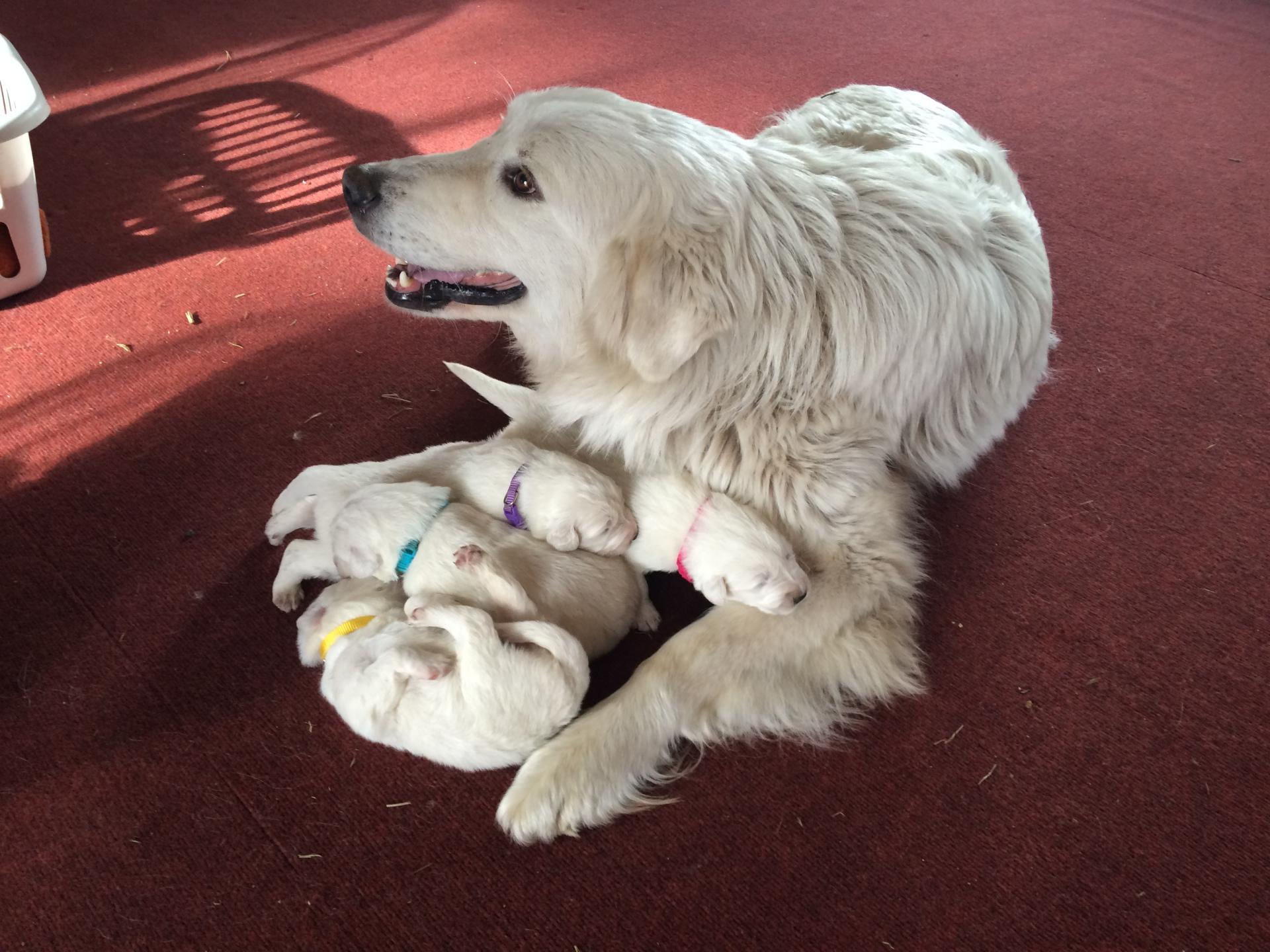 Lil & 2 week old pups