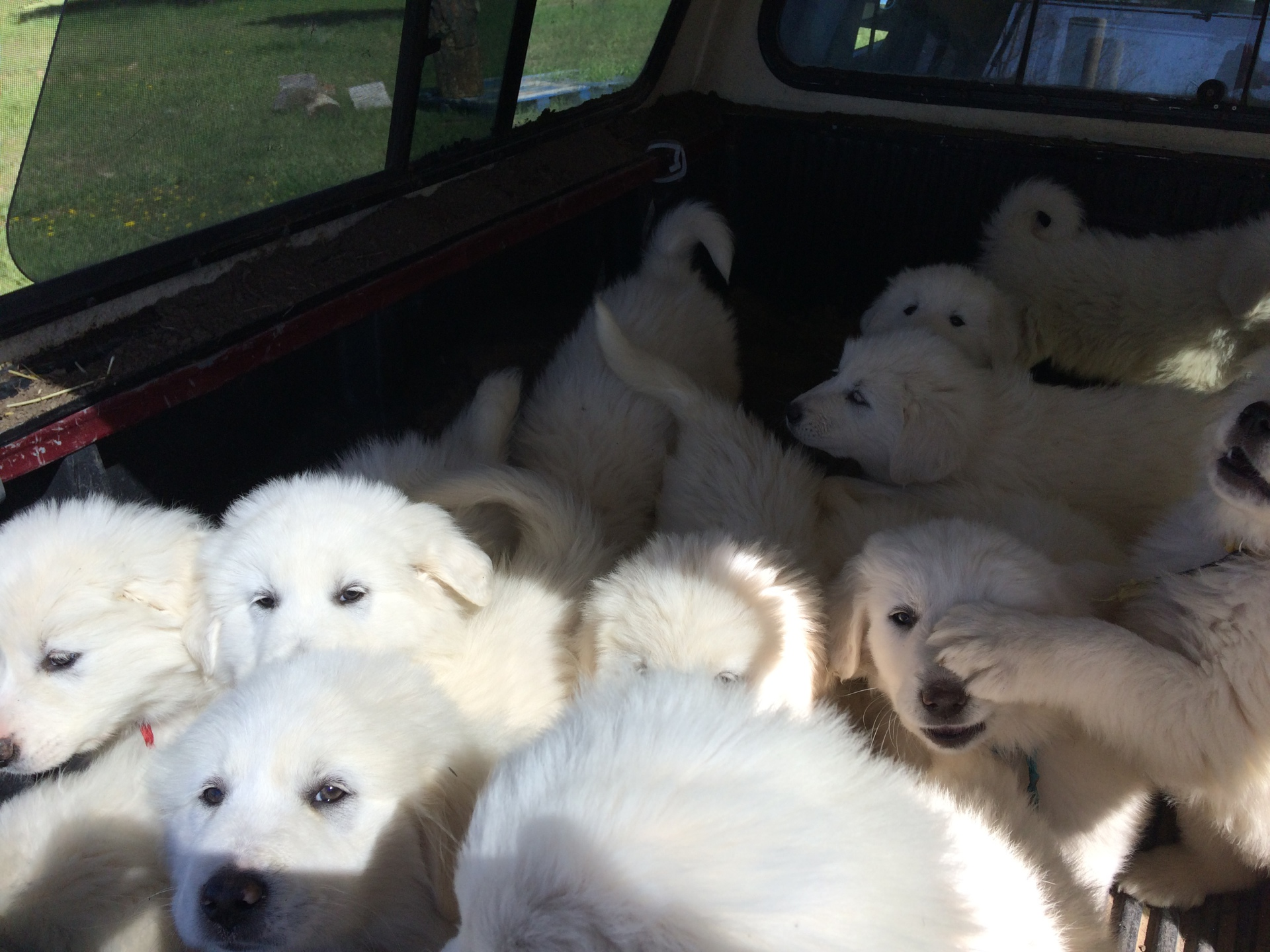 Outing in the truck