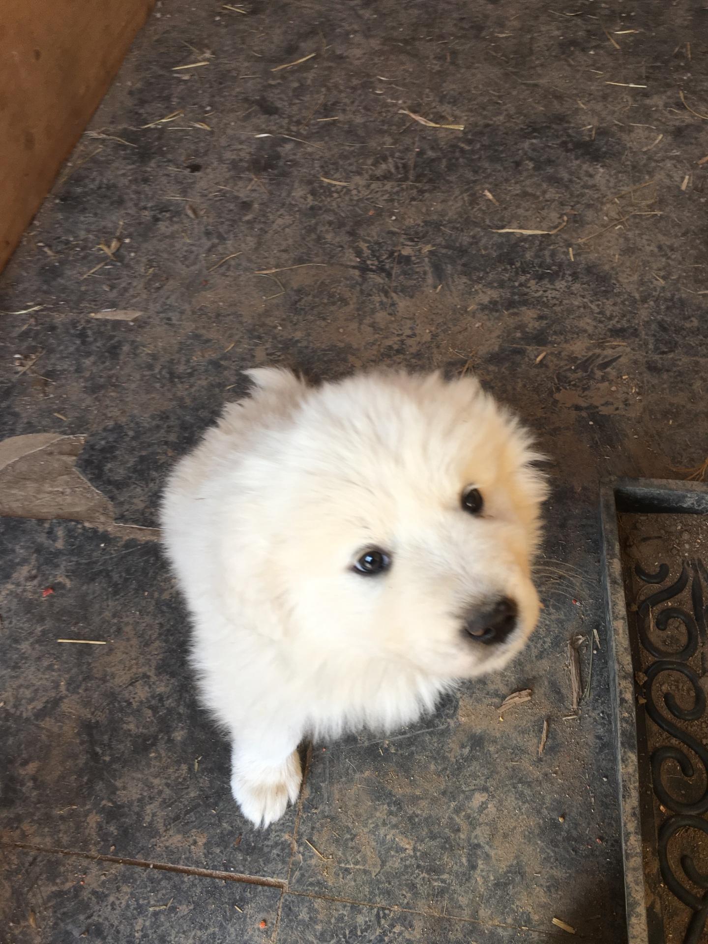 Dk Green collar puppy (male)