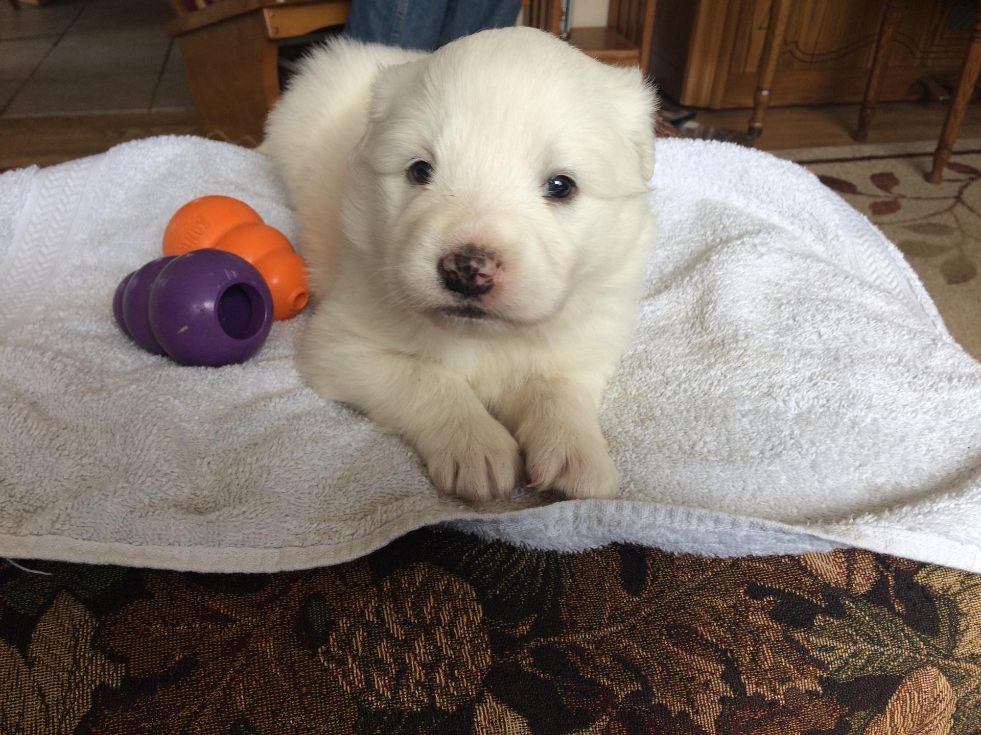 3 week old pup