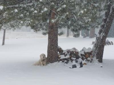 CMDs love snow!