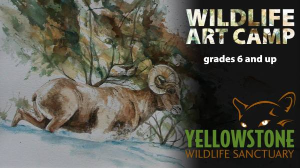 Wildlife Art Camp 2
