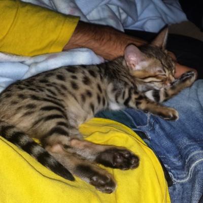 8 month old Kira