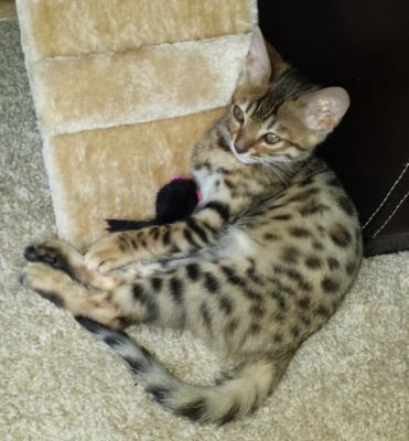 6 month old Kira