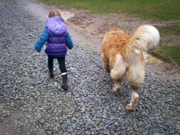 garde d'animaux chien et chat