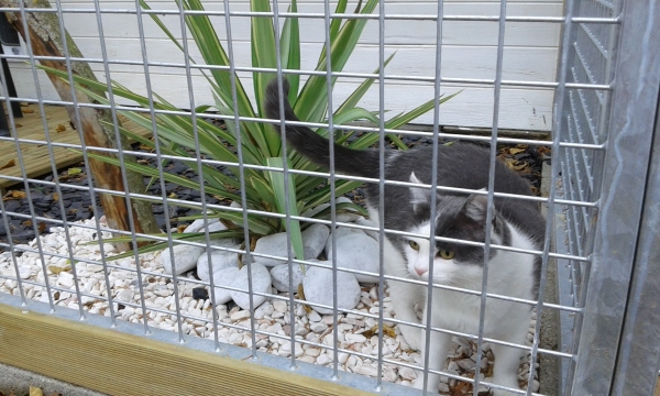 Utopia-Chatterie pension pour chat-Cattery 23 Pet taxi