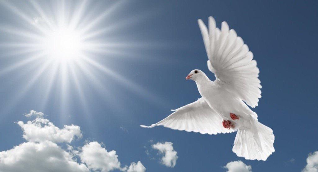 PEACE, FREEDOM & HUMAN DIGNITY