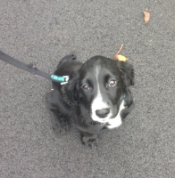 sheffield dog walking